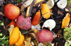 Can Eggshells Be Composted & Used In Your Garden?