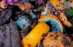 Can You Compost Citrus – Orange Peels And Lemons?
