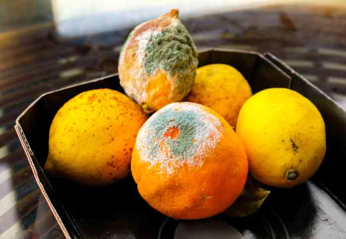 moldy citrus fruit