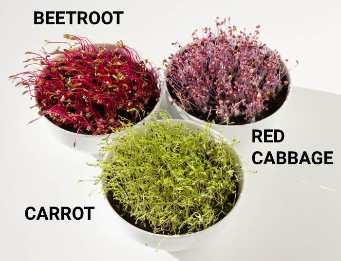 types of microgreens