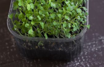 5 Best Growing Medium For Microgreens