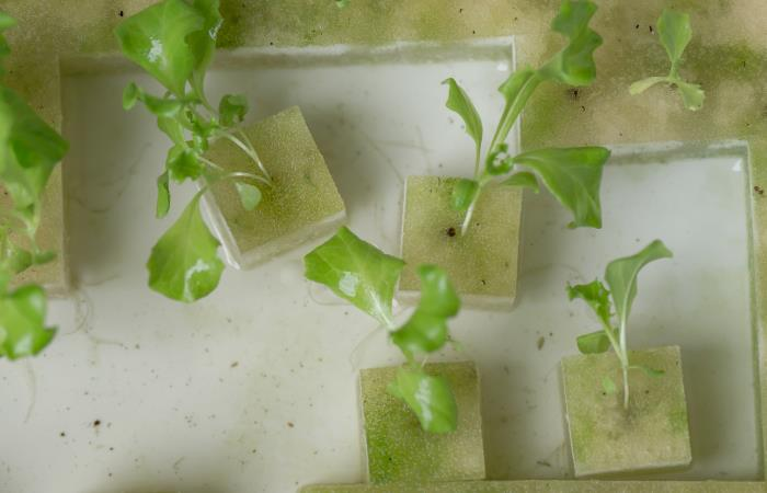 hydroponic growing mat