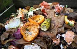 Is Mold In Compost Dangerous To Use At Home?