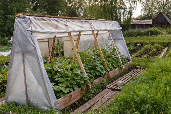 portable hoop house for cucumbers