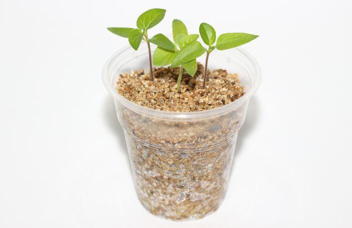 vermiculite-growing-medium