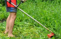 The Best Way To Clear Land In Your Overgrown Yard
