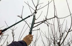 How To Cut High Tree Branches