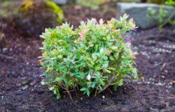 How To Make Soil Acidic For Blueberries & Lower pH