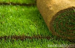 What's The Difference? Hydroseeding vs Sod