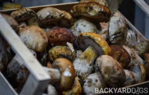 can you compost mushrooms