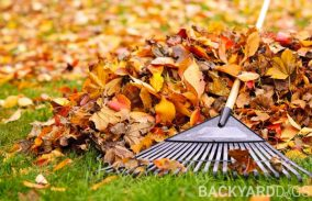 How To Rake Leaves – Best Way To Rake And Bag