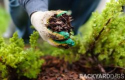Difference Between Mulch vs Bark & Woodchips