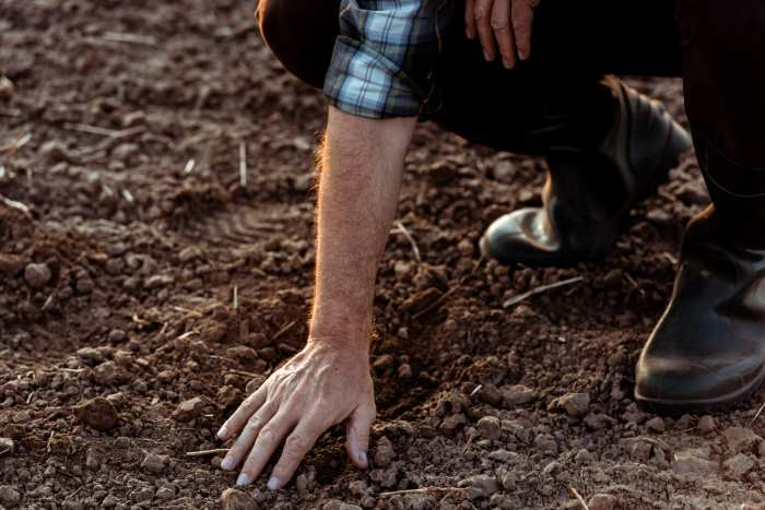 Farmer Touching Rocks In Soil