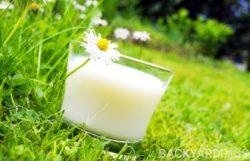 Milk Fertilizer: Is Milk Good For Plants?