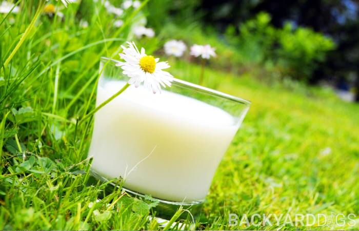 Is Milk Good For Plants