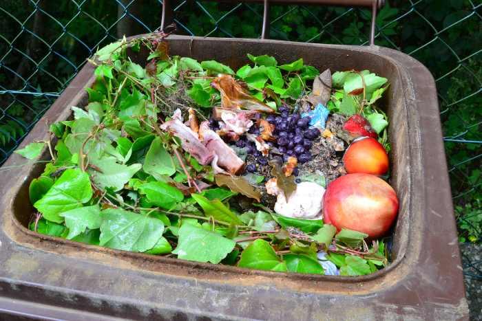 bones in compost