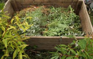 can you compost weeds