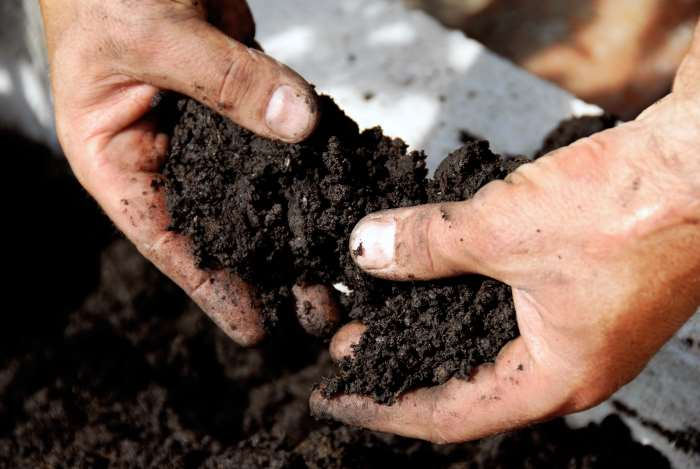 dense garden soil
