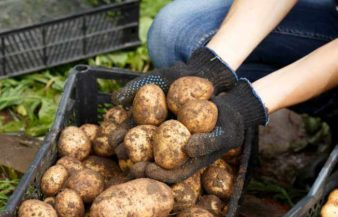 How Many Potatoes In A Pound?