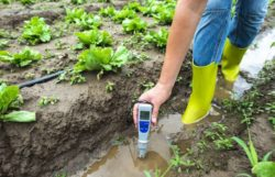How To Test Soil pH With pH Meter