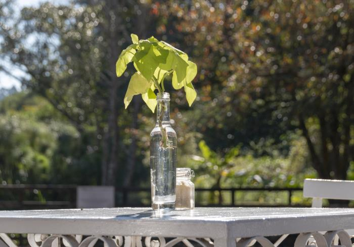 is sugar water good for plants