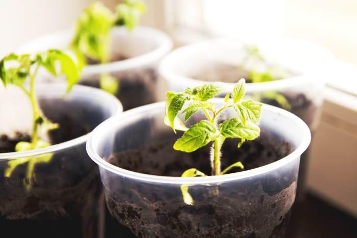 seedlings using garden soil