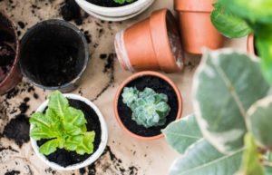 using garden soil in pots