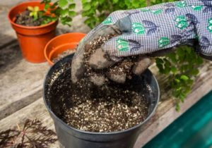what to do with old potting soil