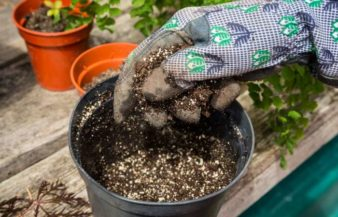 How To Reuse Potting Soil – Step By Step