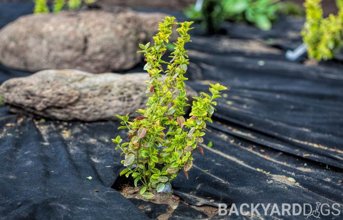 how to keep weeds out of flower beds