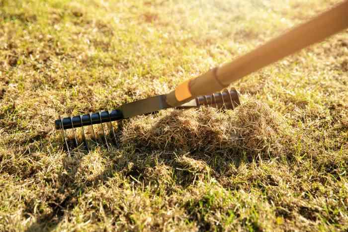 manual lawn dethatcher rake