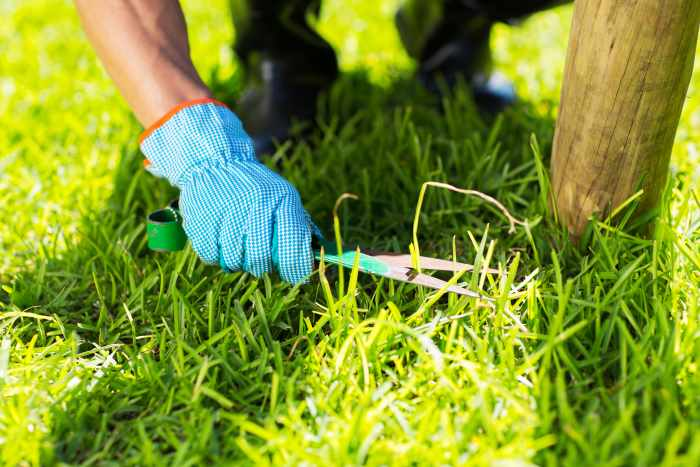 trimming grass with manual shears