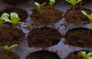 what to do if seeds don't germinate