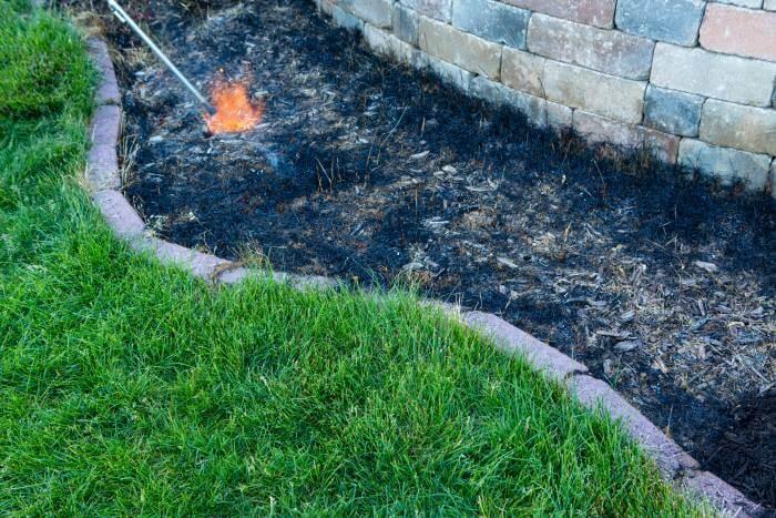 burning grass weeds in flower bed