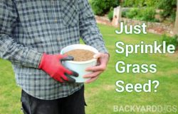 Can You Just Sprinkle Grass Seed On Lawn?