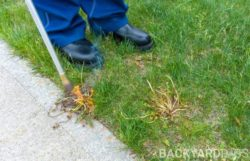 Do Weed Burners Work For Your Lawn And Garden?