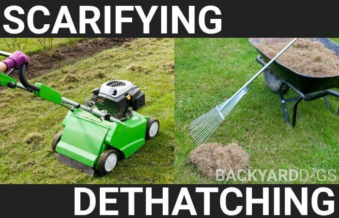 Scarifying vs Dethatching