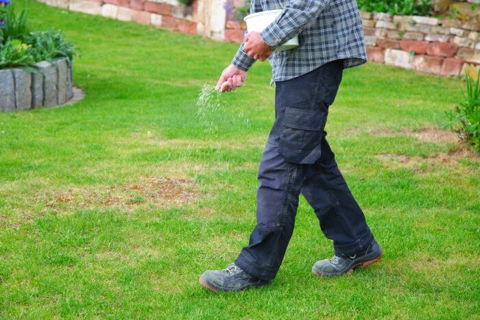 sprinkle grass seed on lawn